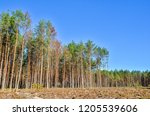 deforestation is ecological... | Shutterstock . vector #1205539606
