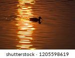 silhouette of duck swimming in...   Shutterstock . vector #1205598619