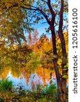 autumn deciduous forest in... | Shutterstock . vector #1205616100