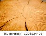 detailed macro end grain ringed ... | Shutterstock . vector #1205634406