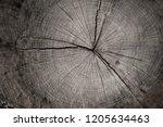 closeup macro view of end cut... | Shutterstock . vector #1205634463