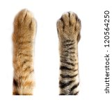 Stock photo cat paws on white background 120564250