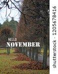 hello november.  autumn in park.... | Shutterstock . vector #1205678416