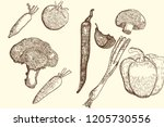 collection of hand drawn... | Shutterstock .eps vector #1205730556