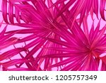 pink red exotic pattern.... | Shutterstock .eps vector #1205757349