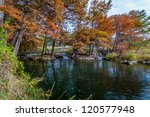large cypress trees with... | Shutterstock . vector #120577948