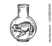 frog animal in laboratory glass ...   Shutterstock .eps vector #1205803540
