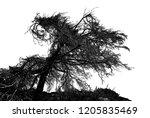 realistic tree silhouette ... | Shutterstock . vector #1205835469