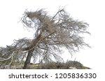 realistic tree silhouette  in... | Shutterstock . vector #1205836330