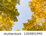 deciduous forest at autumn.... | Shutterstock . vector #1205851990