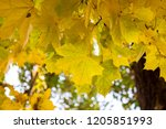 deciduous forest at autumn.... | Shutterstock . vector #1205851993