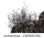 realistic grass silhouettes... | Shutterstock . vector #1205852350