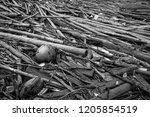 pile of dried bamboo  coconut ... | Shutterstock . vector #1205854519