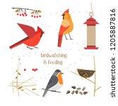birdwatching  bird feeding icon ... | Shutterstock . vector #1205887816