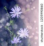 wild flowers on purple... | Shutterstock . vector #1205990860