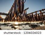 pohang special product of korea ... | Shutterstock . vector #1206026023