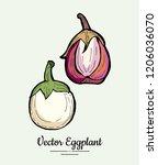 eggplant   hand drawn... | Shutterstock .eps vector #1206036070