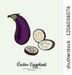 eggplant   hand drawn... | Shutterstock .eps vector #1206036076