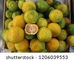 mandarin orange  citrus... | Shutterstock . vector #1206039553