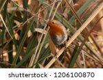 erithacus rubecula european... | Shutterstock . vector #1206100870