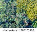 abstract pattern of deciduous... | Shutterstock . vector #1206109120