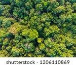 green tropical deciduous forest ... | Shutterstock . vector #1206110869