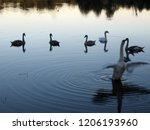 a small flock of swans feeding... | Shutterstock . vector #1206193960