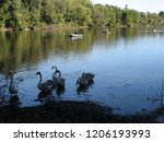 a small flock of swans feeding... | Shutterstock . vector #1206193993