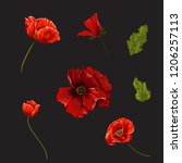 set with poppies flowers.... | Shutterstock .eps vector #1206257113