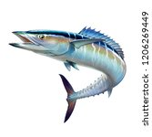 Stock photo spanish mackerel wahoo fish big fish on white realistic illustration isolate 1206269449