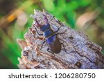 stag beetle. on an old tree. in ...   Shutterstock . vector #1206280750