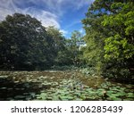 waterlily flowers on a pond | Shutterstock . vector #1206285439