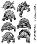 Stock vector graphical set of tortoises isolated on white background vector sketch 1206303553