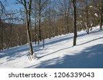snowy deciduous forest. | Shutterstock . vector #1206339043