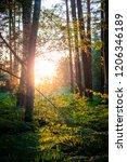 summer adventure photos | Shutterstock . vector #1206346189