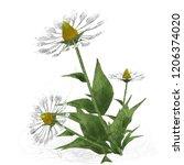 2d illustration. decorative...   Shutterstock . vector #1206374020