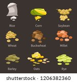ereals and legumes of various...   Shutterstock .eps vector #1206382360
