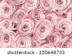Stock photo pink natural roses background 120648733