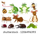 set of animals and insects...   Shutterstock .eps vector #1206496393