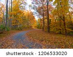 a path among deciduous trees in ... | Shutterstock . vector #1206533020