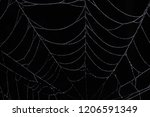 water drops on the spider web. | Shutterstock . vector #1206591349