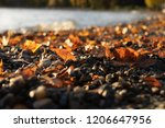 leaf and stone beside lake... | Shutterstock . vector #1206647956