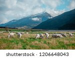 white sheep on hill in new... | Shutterstock . vector #1206648043