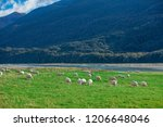 white sheep on hill in new... | Shutterstock . vector #1206648046