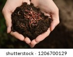 Woman holding worms with soil ...