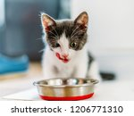 hungry cute baby cat eating | Shutterstock . vector #1206771310