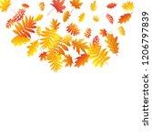 oak  maple  wild ash rowan... | Shutterstock .eps vector #1206797839