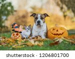 Dog And Cat With Halloween...