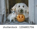 Dog Dressed Like A Ghost And...