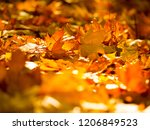 autumn leaves on the sun and... | Shutterstock . vector #1206849523